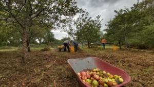 Ramassage de pommes @ Lieu dit de Pont er Lenn,