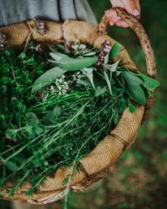Herboristerie : Transformation des plantes aromatiques et médicinales @ Ecovillage de Keruzerh